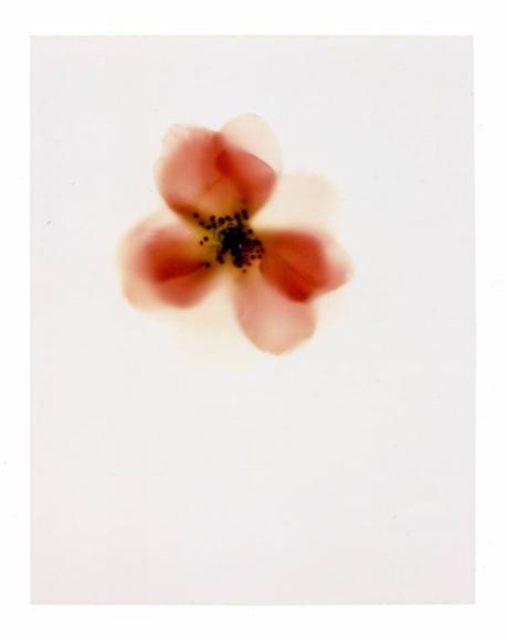 Ichiro Okada photography